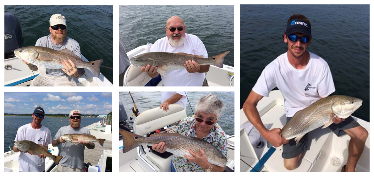 Red hot reds in wrightsville beach fishing reports for Fishing report wrightsville beach nc