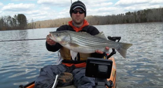 Fishing reports coastal carolina fisherman for Lake gaston fishing report