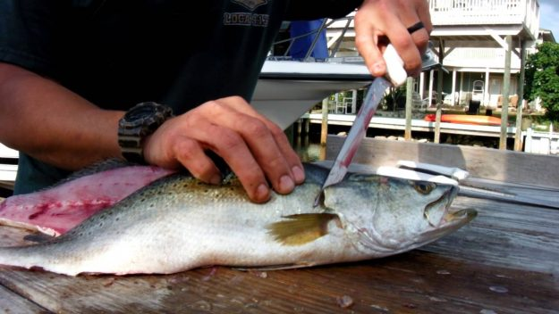 Simple Steps To Cleaning Speckled Trout….Video