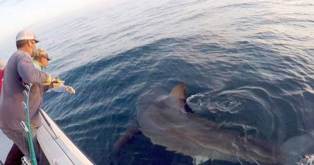 "Hilton Head's ""Great White Shark Hunter""……Interview"