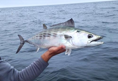 Spring Bonito Fishing…….The Season's Beginning