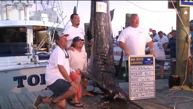 Big Rock Tournament Won By Record Size Marlin