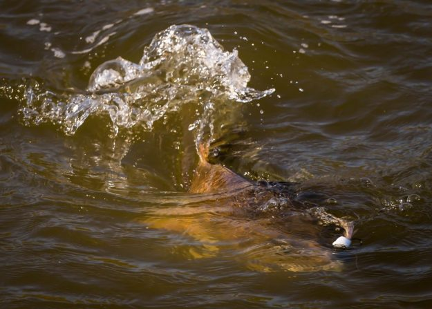 Top Tips for Sight Fishing
