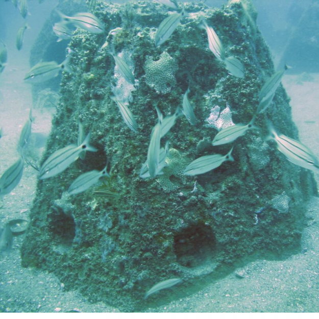 Artificial Reefs and Marine Protected Areas……A Noble Effort Indeed