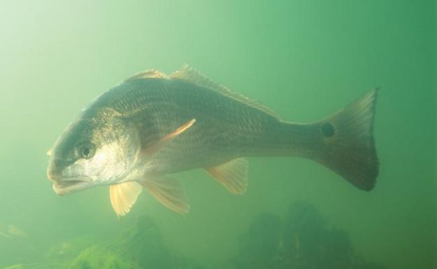 Simple Tactics For Firing Up The Redfish Bite