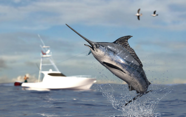 An Offshore Fishing Journey…..More Than Catching