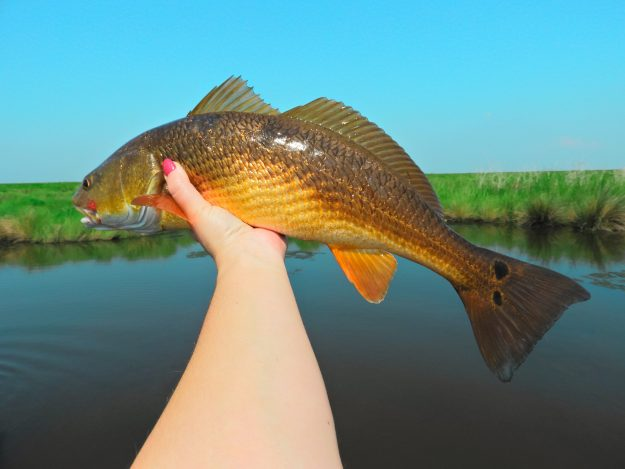 Trolling For Redfish…….A Slow Day Alternative