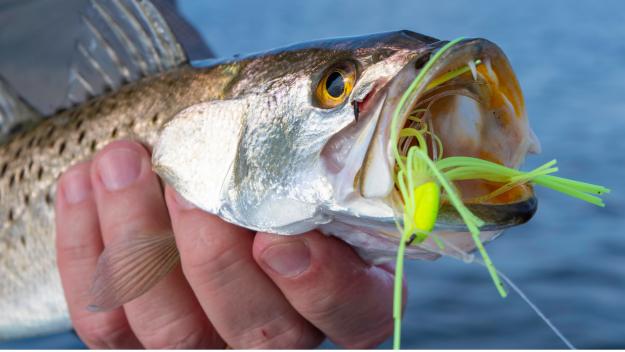 Tactics When the Fish are Skittish